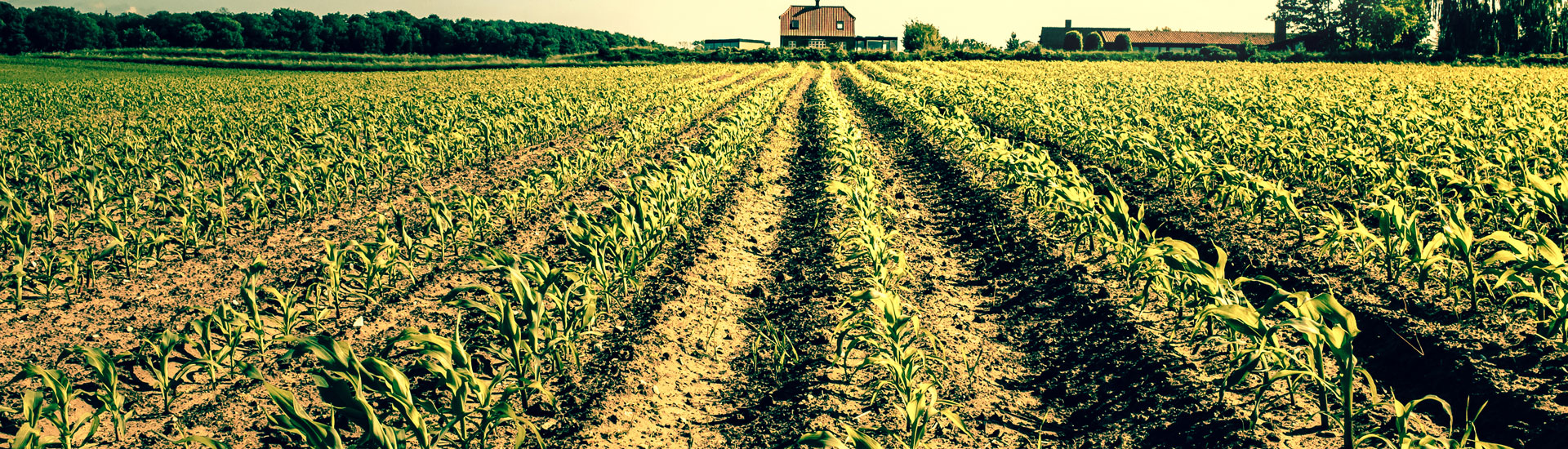 farm-image-1